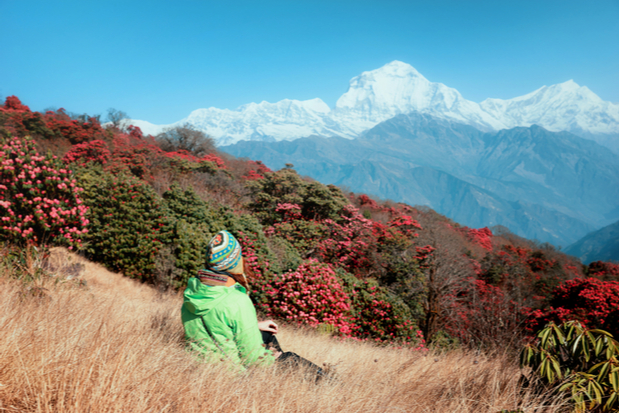 Female trekker looking over rhododendron forest to Annapurna