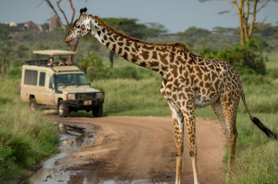 7 tips for your first African safari