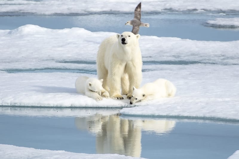 Ten Things You Didn T Know About Polar Bears Explore
