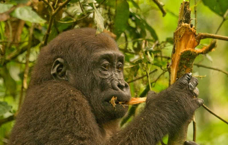 Congo Holidays & Tours