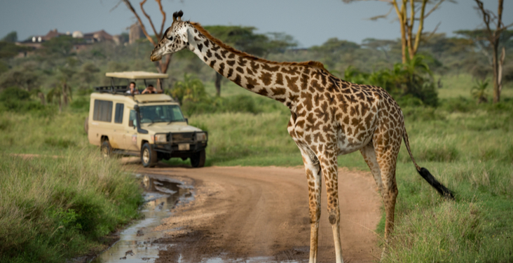 Safari tips and advice