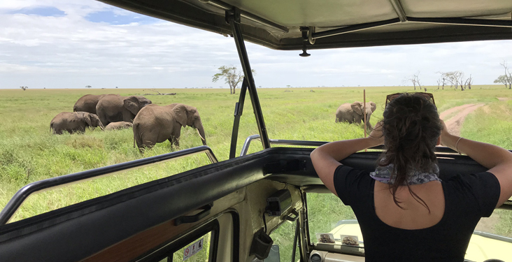 7 tips for your first safari