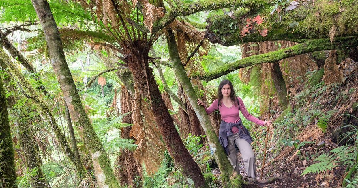 Among the giant ferns of Amboro National Park