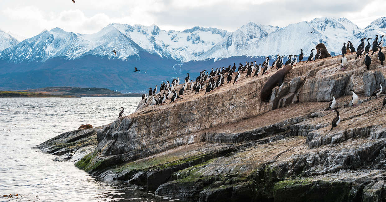 Penguins at the Beagle Channel
