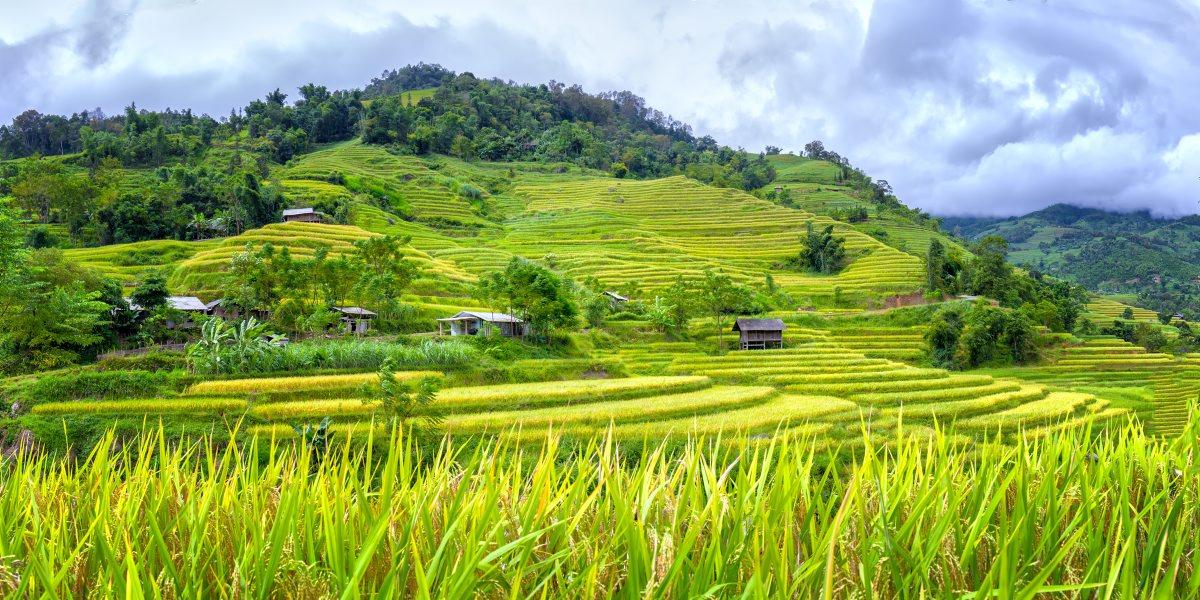 Rice terraces around Mai Chau